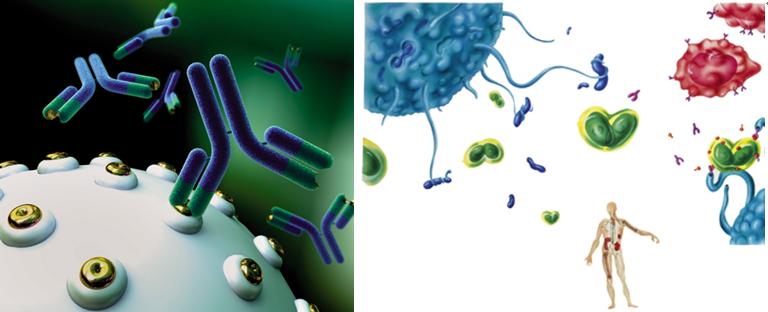 为什么生物体可以抵抗病毒的攻击