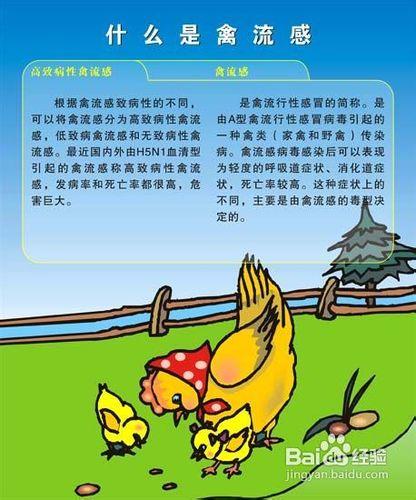 如何预防h7h9禽流感