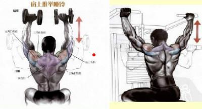 三角肌锻炼_增肌速成:[3]如何有效锻炼三角肌