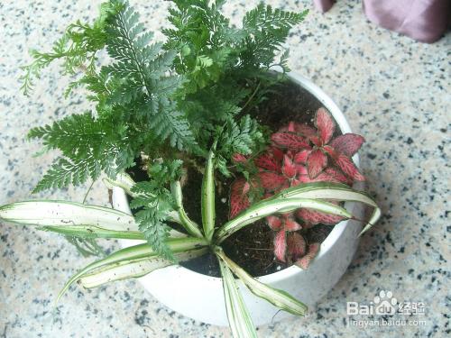 手工/爱好 > 园艺  4 在小陶瓷花盆内出水孔处放一小块瓦片,并放在盆图片
