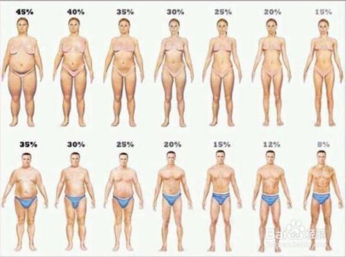 人体臀体_人体七大尺寸决定寿命长短