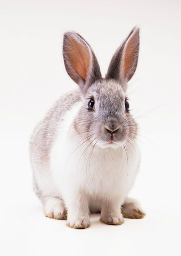 兔子蚊子动物354_500竖版竖屏手机没被壁纸咬身上痒图片