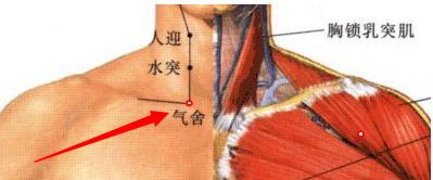 气舍穴属于足阳明胃经穴位图,气舍穴位于颈部,当锁骨内侧端的上缘