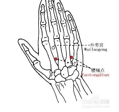 第一个穴位是腰痛穴,以手背侧,当第2,3掌骨及第4,5掌骨之间,当腕横纹图片