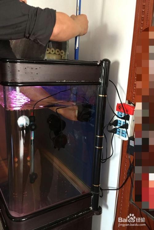 怎樣清潔魚缸的過濾器?圖片