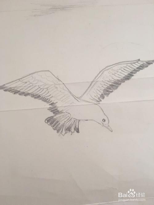 一只 海鸥的铅笔画怎么画图片