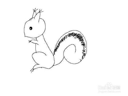 三级甲简笔画_【乐趣】松鼠怎么画松鼠简笔画技巧