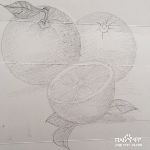 画上一个扁圆形  作为这组图的组成部分 5 第五步  根据扁圆形  再画图片