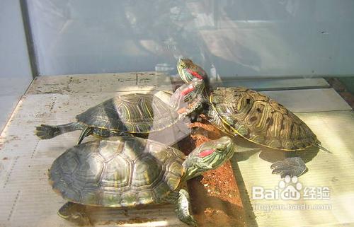冬天怎么养乌龟