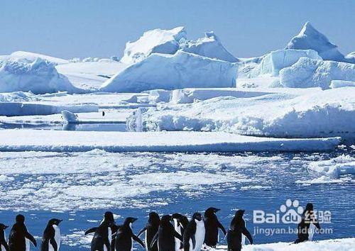 怎样做好南极旅游的准备工作