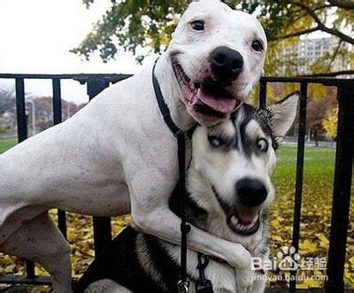 受不了的图片搞笑_曾为最2,最搞笑的狗狗,它的眼神,它的行为,让我们笑破了肚皮.