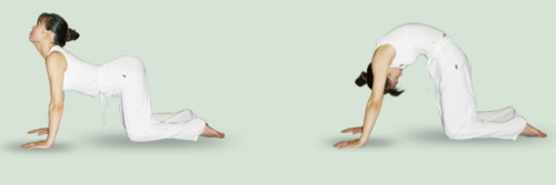 瑜伽猫伸展式图片