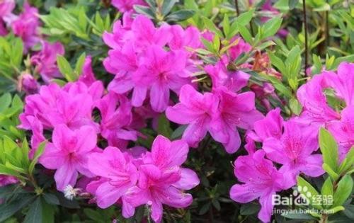 四川春季旅游之赏花攻略云南泸沽湖旅游攻略图片