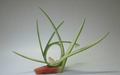 教你在家做简单水果拼盘的西瓜片草花图片