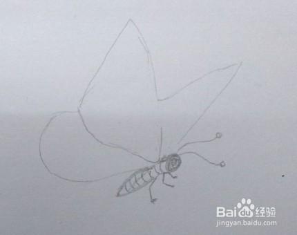 蝴蝶画法教程(7)蝴蝶怎么画,如何画蝴蝶?图片