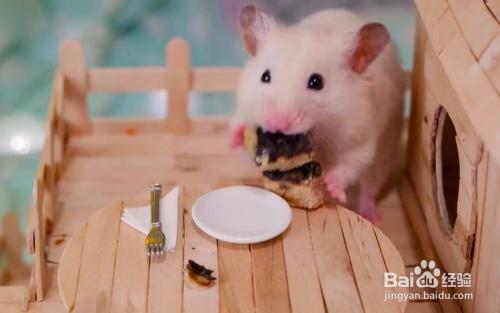 6比较鼠粮夏天要给仓鼠喂大作清淡的蚂蚁,面包虫的少喂或者不食物去火战吧图片