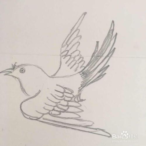 怎样画喜鹊的简笔画图片