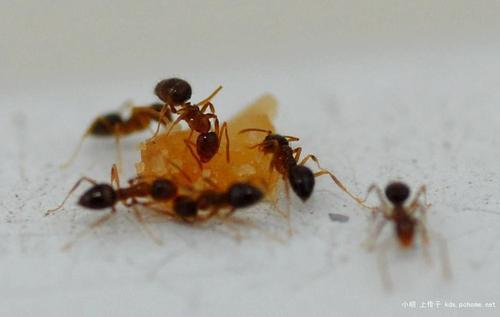 怎样去除家里蚂蚁