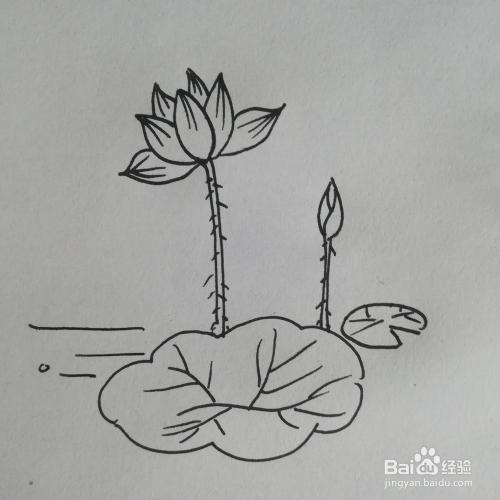 荷花的简笔画画线描画怎么画