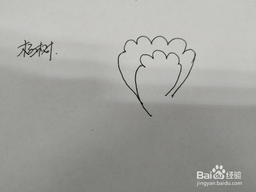 杨树简笔画怎么画,怎么画杨树简笔画手绘图片