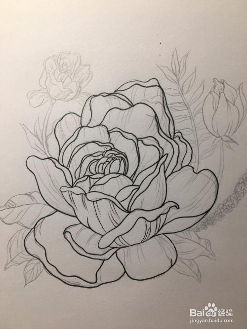 玫瑰的绘画教程 玫瑰线稿 玫瑰花朵线描画图片