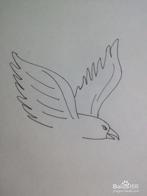 老鹰的简笔画怎么画,老鹰简笔画卡通
