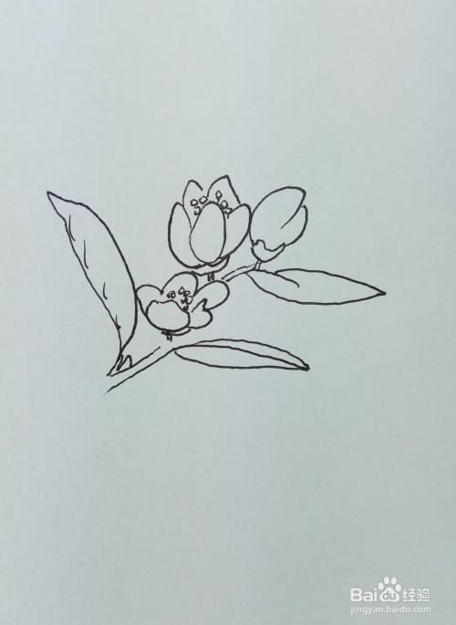"""怎样画儿童简笔画""""漂亮的桃花""""?图片"""