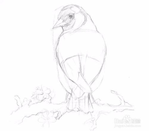 简单素��f���;�&_素描入门教程简单素描画,画只鸟只需这么简单