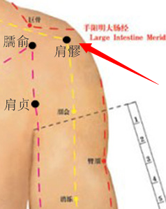 人体土术_肩髎穴属于手少阳三焦经穴位图,肩髎穴位于人体肩部,肩髃后方,当臂外