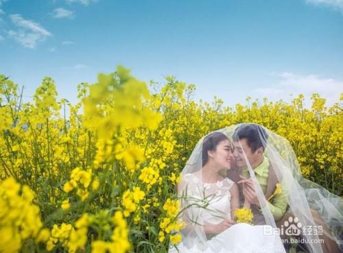 壁纸 成片种植 风景 婚纱 婚纱照 植物 种植基地 桌面 500_369