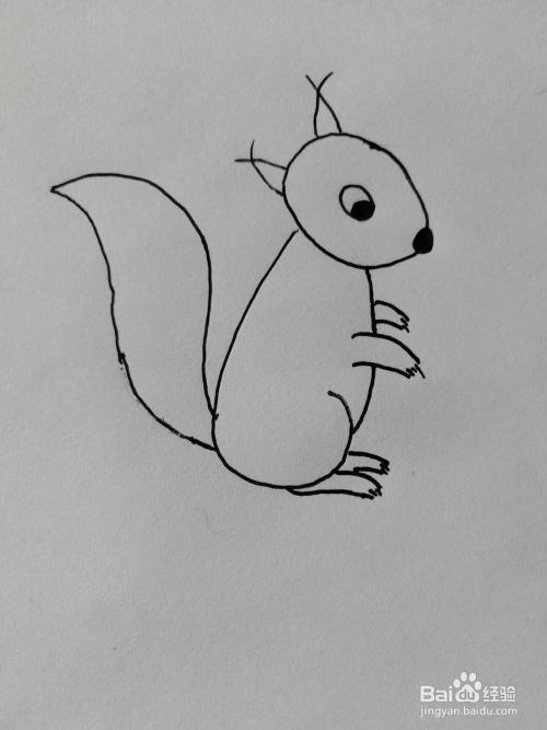 简笔画(17)——用数字06画可爱的小松鼠图片