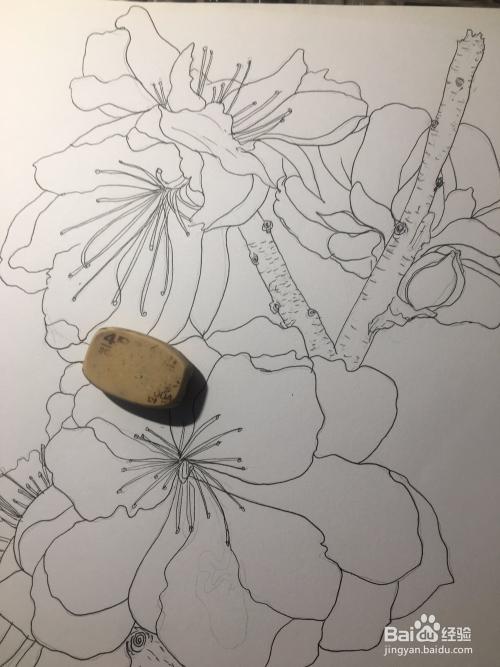画一朵梅花 冬季梅花的画法 梅花简笔画线描画图片