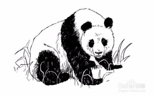 如何绘制熊猫——加菲的吃货生活图片
