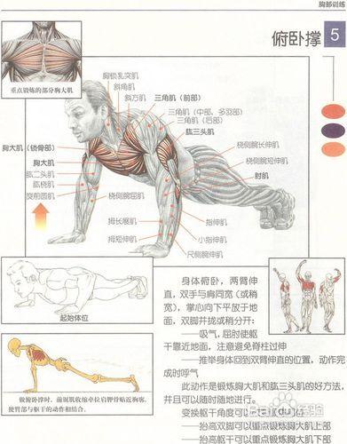 肌肉强度的锻炼