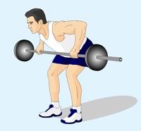 杠鈴劃船——健身必看!圖片