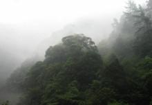 Cold temperate vegetation