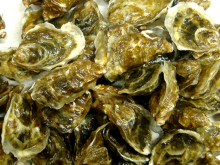 Oyster (Figure 7)