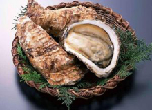 Oyster (Figure 6)