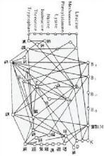 The vegetative cell (four)
