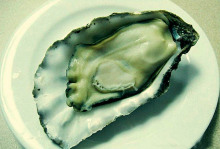 The oyster intact (Figure 1)