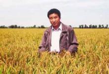 陈温福:锲而不舍的超级稻育种家