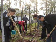 清明节植树