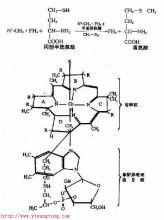 维生素B1结构图