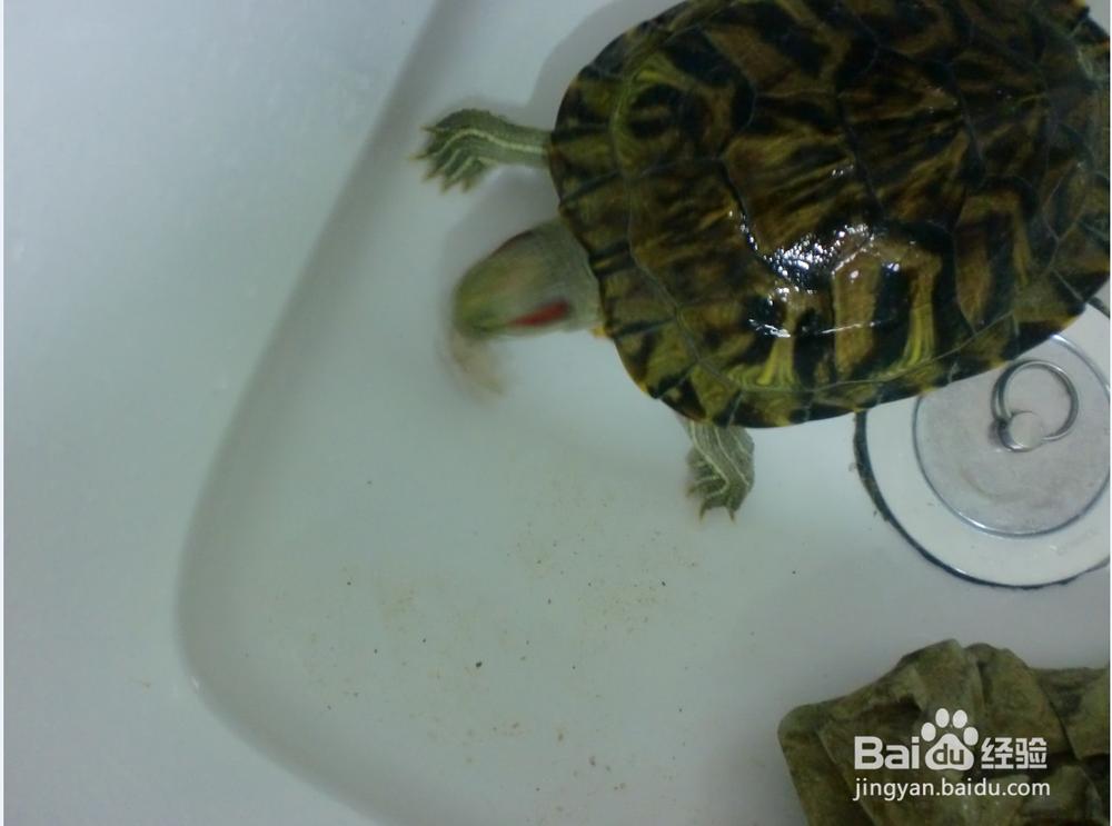 家里如何养乌龟,给它吃什么
