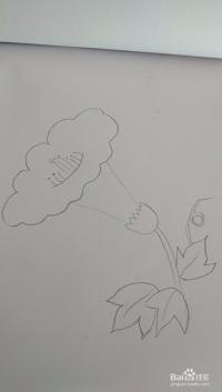 多妈简笔画一朵打碗花