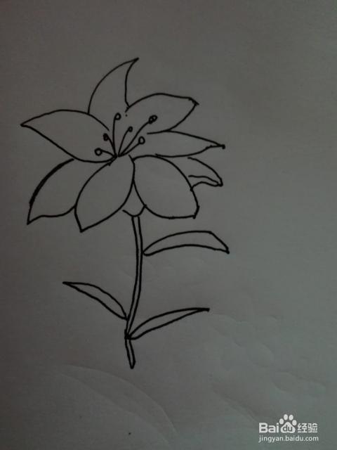 简笔画 百合花