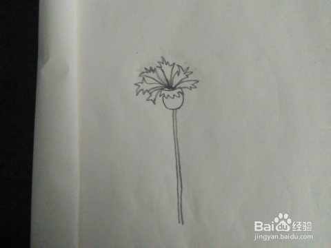 宝宝学画画 简单的花儿简笔画怎么画 一