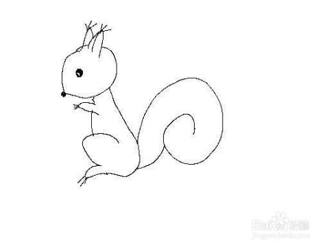 松鼠怎么画松鼠简笔画技巧