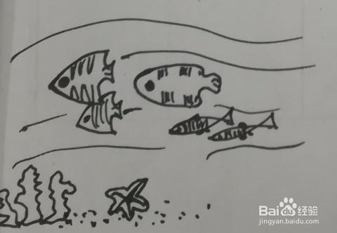 有热带鱼的海底世界怎么画简笔画 怎么组合