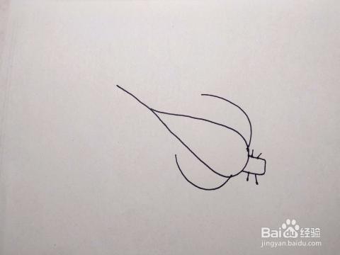 怎么画大白菜小白菜卡通儿童简笔画 儿童画教程